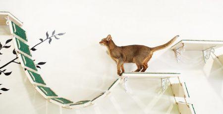 enriquecimento felino vetheling