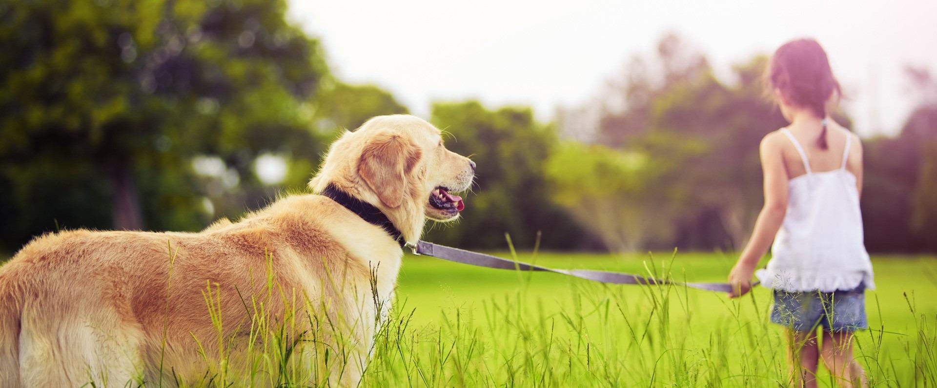 veterinaria bh, veterinaria vethealing, veterinaria belo horizonte, veterinaria santo agostinho, vet healing bh
