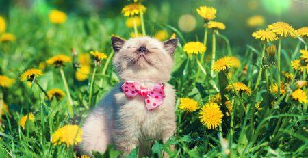 veterinaria bh, veterinaria vethealing, veterinaria belo horizonte, veterinaria santo agostinho, vet healing bh, clinica veterinaria em bh